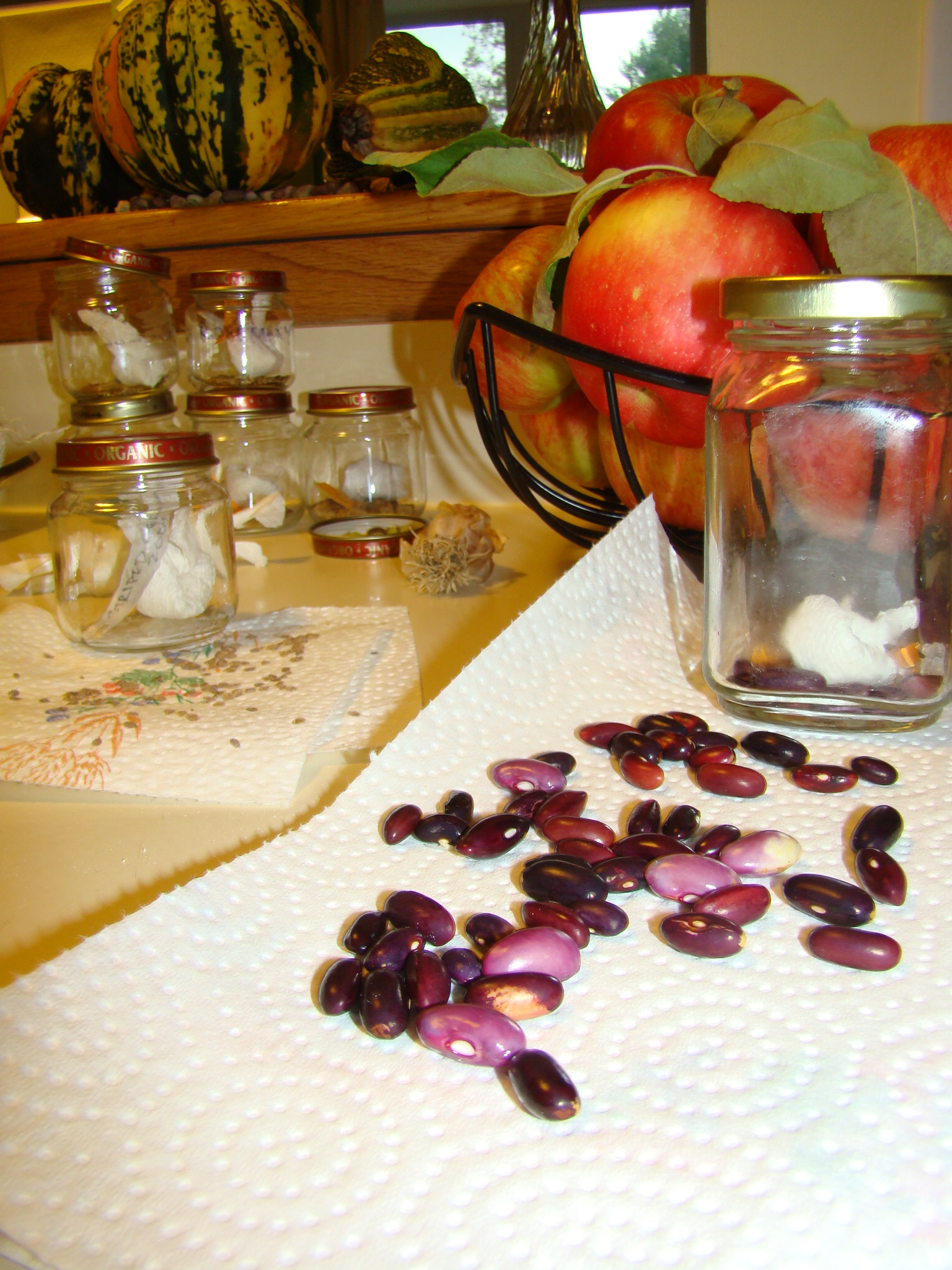 Beans and tomato seeds drying for storage | Small Green Garden